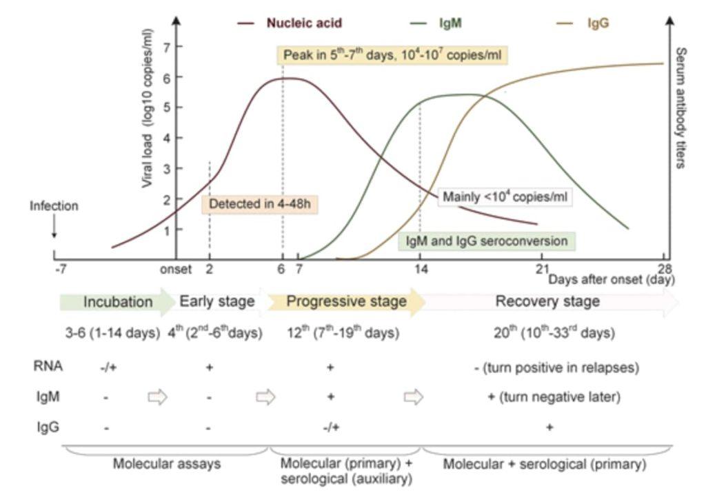 RS-Cov-2 Hastalarında Nükleik Asit ve Antikorların Zamansal Dinamikleri